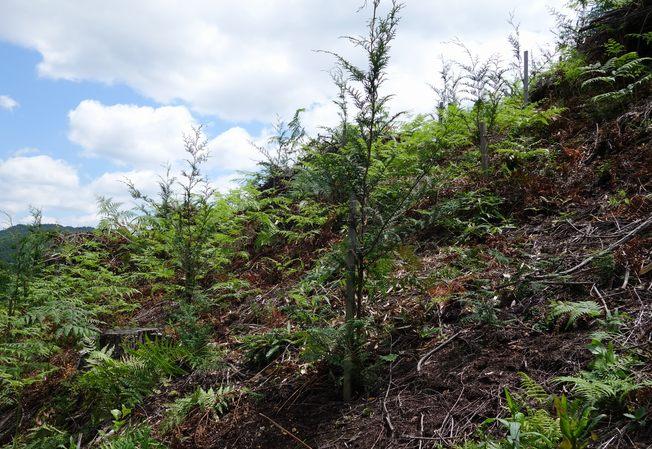 比賀木材 育林・造林