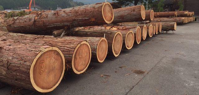 比賀木材 素材丸太生産