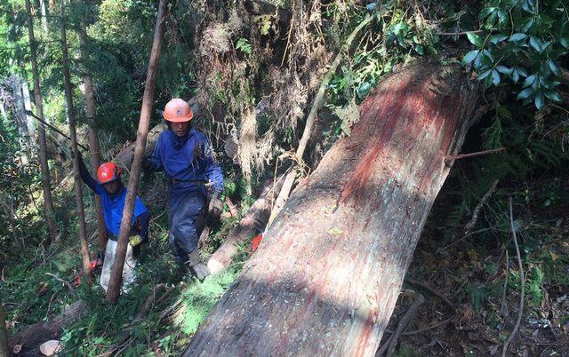 比賀木材 素材生産