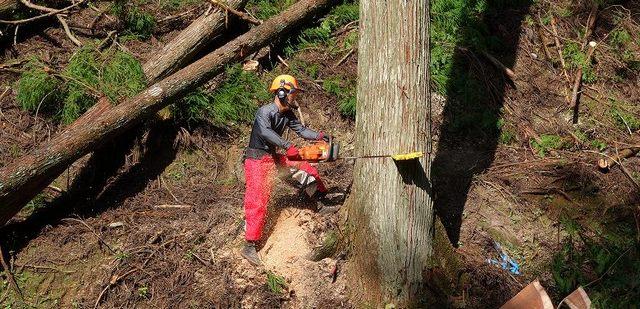 比賀木材 立木伐採集材