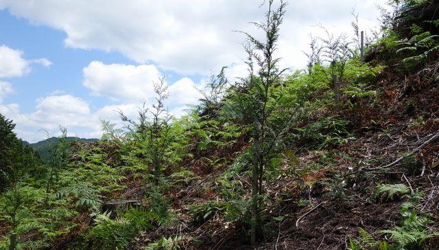 比賀木材 造林育林