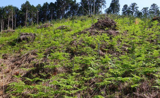 比賀木材 植林